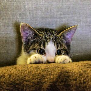 Katze als Haustier