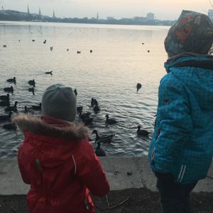 Warum man Enten nicht mit Brot füttern sollte